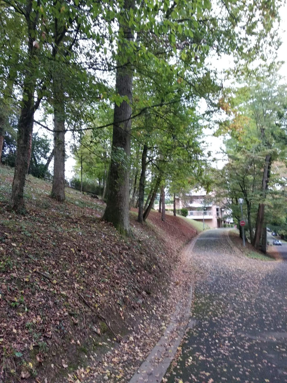 rez-de-jardin-proche-ecole-grandmont